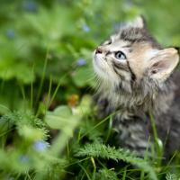 Kitten Wellness Package at THPHCC